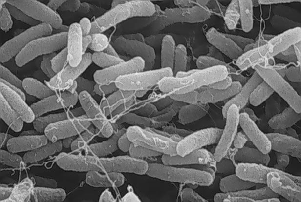 Туберкулёз – одна из самых опасных
